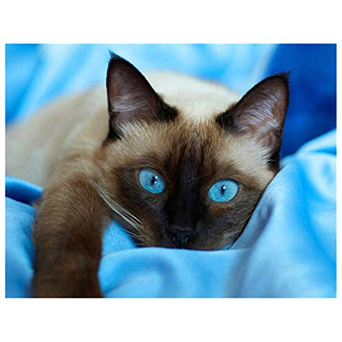 5D DIY Diamond Painting by Number Kit Blue Eyes Cat Square Drill,50x40cm Adults and Kids Full Drill Beads Crystal Rhinestone Embroidery Cross Stitch Supplies Arts Craft for Home Wall Decor U4202