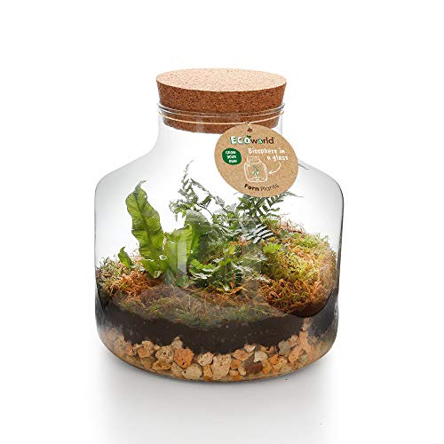 Ecoworld Jungle Biosphere - Komplett DIY Flashengarten Set Inklusive Pflanzen - Basic Glass Ø 22 cm Höhe 23 cm