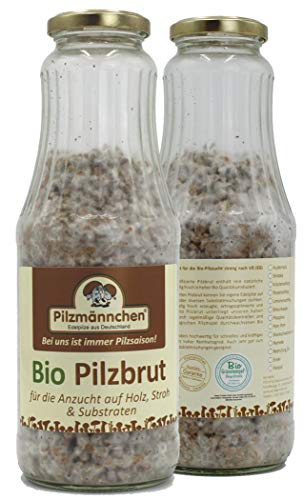 Bio Kräuterseitling Körnerbrut - Pilze selber züchten