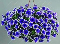 VISTARIC 16: 100 Pcs mixte vrai Cactus Seeds, Mini Cactus, Figuier, Graines Bonsai fleurs, vivaces herbes Plante en pot pour jardin 16