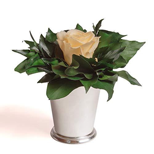 ROSEMARIE SCHULZ Heidelberg Infinity Blume in silberfarbenen Becher 1 ewige Rose konserviert Blumenstrauß langhaltend (Beige, 1 Rose)