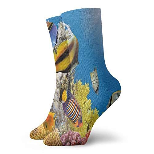 Calcetines de compresión altos, colonia en un mar de arreci