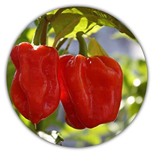 Habanero Rosso, Peperoncino Molto Piccante, 50 Semi