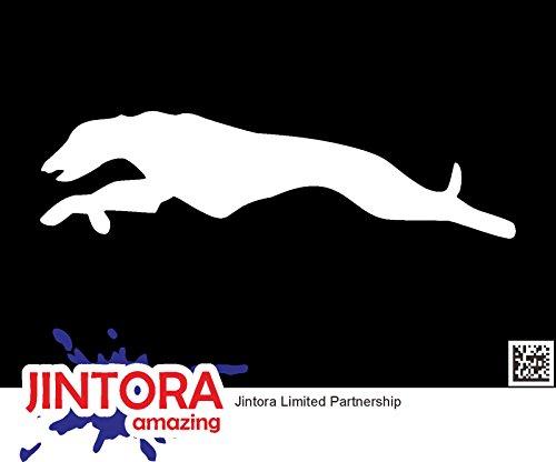 JINTORA Etiqueta para el Coche/Etiqueta engomada - Carrera de Galgos - 149x40mm - JDM/Die Cut - Blanco
