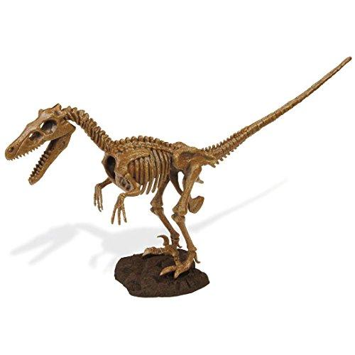 Geoworld 625302 - Dr. Steve Hunters: Dino Ausgrabungs-Set - Velociraptor-Skelett, Alter: 6+, Größe: 27 cm