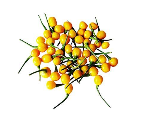 100 Samen Charapita Chili -Teuerste Chili der Welt- WILDCHILI
