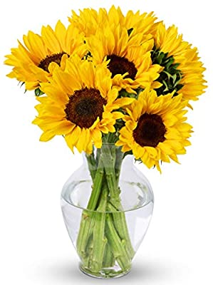 Benchmark Bouquets Yellow Sunflowers, With Vase (Fresh Cut Flowers) from Benchmark Bouquets