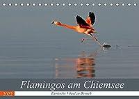 Flamingos am Chiemsee (Tischkalender 2022 DIN A5 quer): Exotische Voegel zu Besuch (Monatskalender, 14 Seiten )