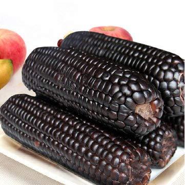 Bshopy 30pcs Negros Negros Semillas de maíz Adhesivas de maíz Vegetal Semillas de maíz ceroso Granja jardinería