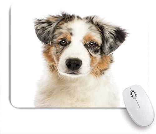 FOURFOOL Mauspad,Schließen Sie oben von einem australischen Schäferhundwelpen, 3 Monate alt, betrachten Kamera gegen weißen Hintergrund,Laptop Tischunterlage Schreibunterlage für Büro Gaming Mauspads
