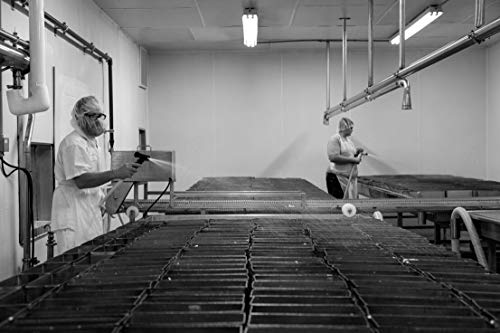 18 x 24 Black & White Canvas Wrap of Workers Spray-Clean vats at The Old Country Cheese Plant in Cashton Wisconsin Where Large Bricks of mild semi-Soft muenster Cheese are fashione b78 2016 Highsmith