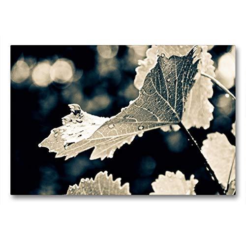 Premium Textil-Leinwand 90 x 60 cm Quer-Format herbstliche Weinberge am Wagram | Wandbild, HD-Bild auf Keilrahmen, Fertigbild auf hochwertigem Vlies, Leinwanddruck von Bodinifoto