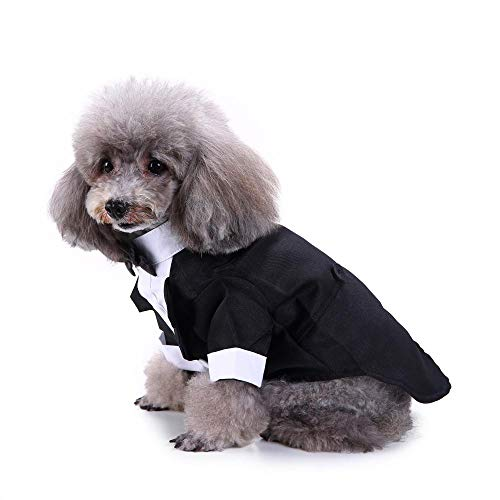 MRQXDP Traje de Ropa para Mascotas, Vestido de Moda, Ropa para Perros, Disfraz de Gato, Disfraz de Personalidad de Halloween-SDZ73-14-L