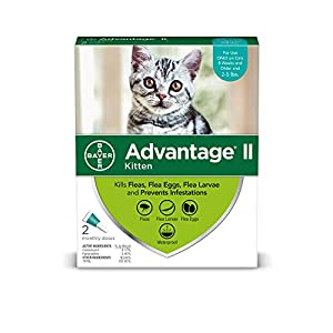 Advantage II Once-A-Month Cat & Kitten Topical Flea Treatment,...