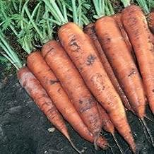 Tendersweet Carrot Seeds, 1200+ Premium Heirloom Organic Seeds, ON SALE!, (Isla's Garden Seeds), Non GMO