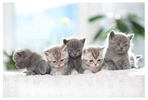 Klassiek puzzelspel Leuke kat series-7-volwassene decompressie houten puzzel 1000 piece for kinderen educatieve spelletjes 500/300 stuk Houten puzzel Een groep van kleine kittens Stevig en gemakkelijk