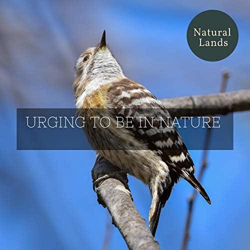 Nature Sound Series & Nature Recordings