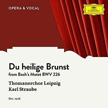 J.S. Bach: Du heilige Brunst