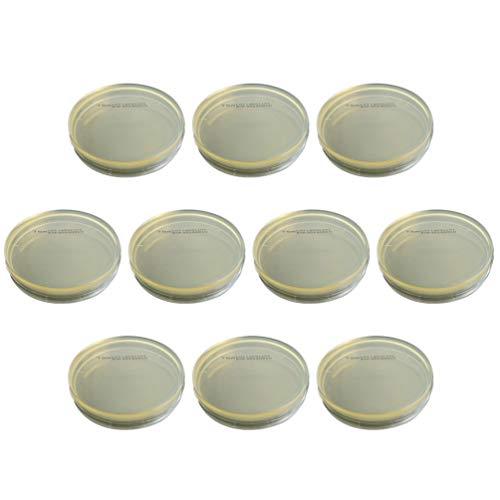ULTECHNOVO 10 Stück Einweg-Agarplatten Vorgegossene Kartoffel-Dextrose-Agar-Petrischalen Professionelles Medium Zur Identifizierung Der R2a-Agar-Isolierung für Das Labor (Vakuumverpackung)