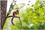 Wallario Garten-Poster Outdoor-Poster, Eichhörnchen auf