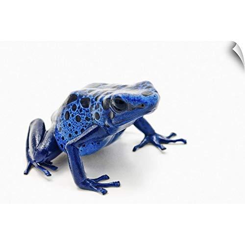 "CANVAS ON DEMAND Blue Poison Dart Frog (Dendrobates Tinctorius) Wall Decal, 24""x16"""