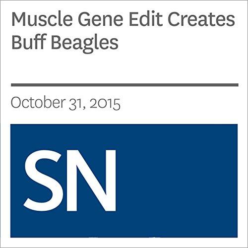 Muscle Gene Edit Creates Buff Beagles cover art