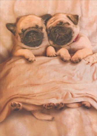 Pug Puppies Funny Dog Valentine's Day Card