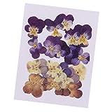 P Prettyia 20 Piezas Violeta Flores Naturales Prensadas y Secas Fabricación de Papel de Arte