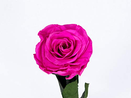Rosa eterna preservada fucsia de 25 cm