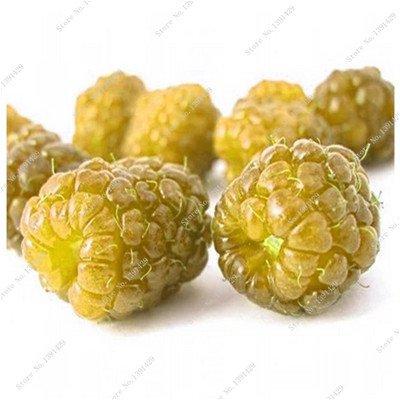 Coloré Blackberry Arbre Raspberry Graine Fruit Graine Mulberry Stratified Black Berry Bonsai non-OGM plantes bio 500 pcs/sac 1