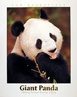 大人の子供のための300ピースのジグソーパズルジャイアントパンダすべてのピースはユニークで、ピースは完璧にフィットします