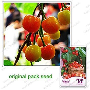 5/Paquet Graines cerise Graines Fruits bio Bonsaï Graines Cerasus Pseudocerasus pour le bricolage jardin