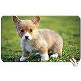 Animaux Animaux Chiens Chiots Corgi Fond d'écran canin Grand Tapis de Souris Tapis de Souris d'ordinateur