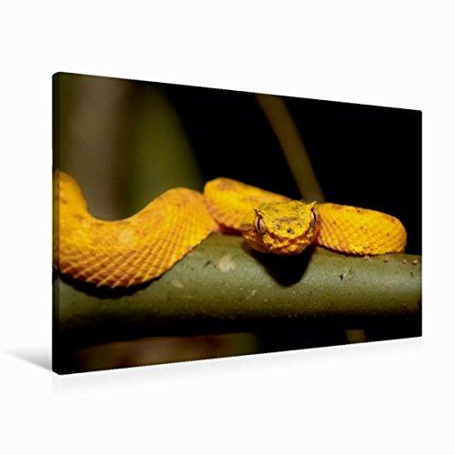 Calvendo Premium Textil-Leinwand 90 cm x 60 cm quer, Greifschwanz-Lanzenotter (Bothriechis schlegelii) | Wandbild, Bild auf Keilrahmen, Fertigbild auf echter Costa Rica tierisch gut Tiere Tiere