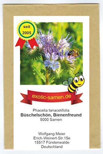 Büschelschön - Bienenfreund - Bienenweide - Phacelia - 5000 Samen