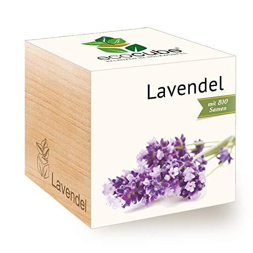 Feel Green Ecocube Lavande Bio Velours Longue Durée Idée Cadeau (100% Eco Friendly), Grow Your Own/Culture, Plantes en Bois Fabriqué en Autriche