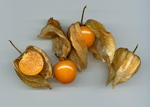 Physalis pruinosa, Ananaskirsche, schmackhafte Beeren, schnellwachsend, 10 Samen, von unserer ungarischen Farm samenfest, nur organische Dünger, KEINE Pesztizide, BIO hu-öko-01