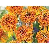 家宝レアエキナセア「マーマレード」花の種、100種/パック、新コーンフラワー100%真バラエティKk090