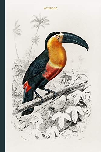 Notebook: Vintage Toucan (Ramphastos) illustrated by Charles Dessalines D' Orbigny | Recycled Lined Blank Journal