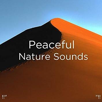 "!!"" Peaceful Nature Sounds ""!!"