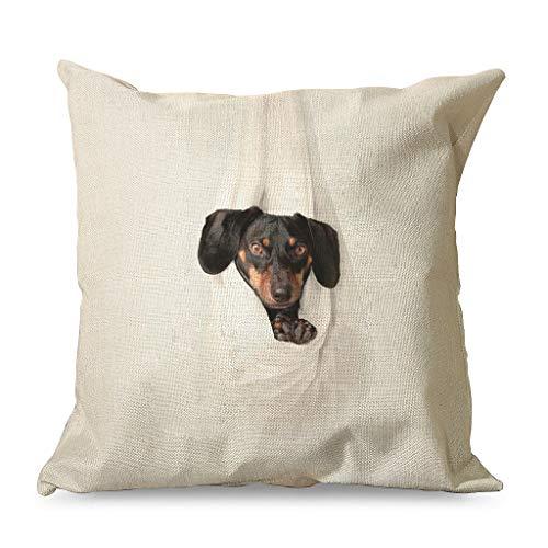 IOVEQG Smalland Spaniel - Juego de fundas de almohada cuadradas con cremallera oculta para viajes, estilo familiar, color blanco 45 x 45 cm