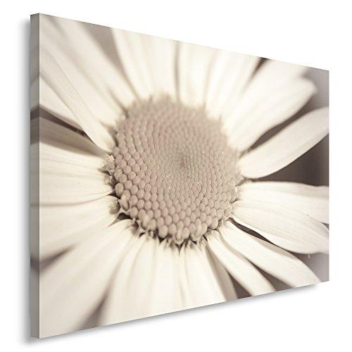 Feeby Frames, Cuadro en lienzo, Cuadro impresión, Cuadro decoración, Canvas de una pieza, 50x70 cm, FLOR, FLOR GRANDE, BLANCA, BLANCO, BEIGE