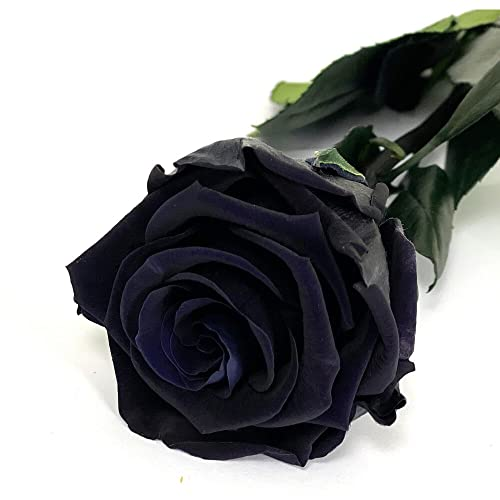 Mundo Eterno Rosa Eterna Preservada 35cm Negra