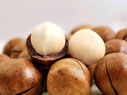 3 libbre (1362 grammi) dado saltati in padella Macadamia ternifolia F. Muell Grado A dalla Cina