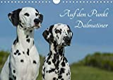 Auf den Punkt - Dalmatiner (Wandkalender 2020 DIN A4 quer)