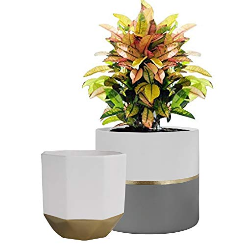 La Jolíe Muse White Ceramic Flower Pot Garden Planters 16.5 CM Pack 2 Indoor, Plant Containers with Gold and Grey Detailing
