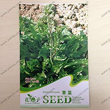 Fash Lady Graines de légumes originales, graines de Shepherd's Purse, floraison mature 60 jours, graines de 100 particules/sac