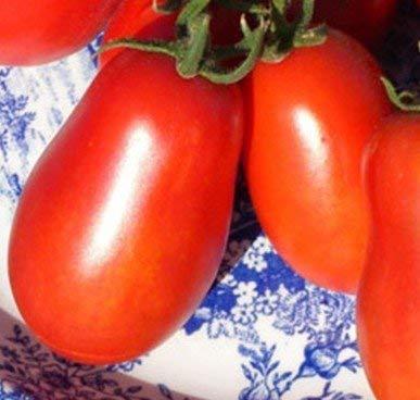 5 paquets de 25 graines Milano Plum - Graines de tomate bio
