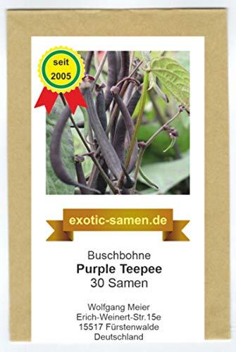 Buschbohne - Kidney-Bohne - Purple Teepee - 30 Samen