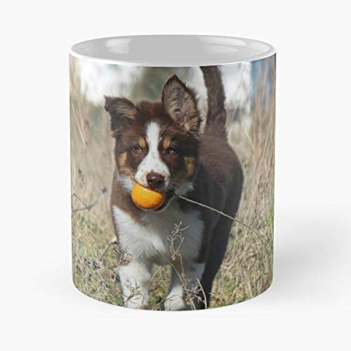 lumeCube Orange Dog Chocolate Collie Puppy Border Tricolor Ball Best 11 oz Kaffeebecher - Nespresso Tassen Kaffee Motive